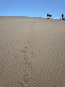 My footprints after walking down a dune.